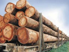 entre-janvier-et-aout-2018-le-cameroun-a-exporte-135-491-metres-cubes-de-bois-vers-la-chine-representant-plus-de-27-milliards-fcfa