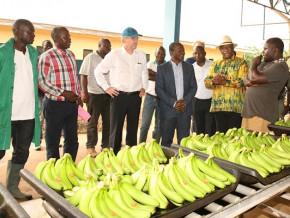 l-ue-proroge-de-2-ans-son-programme-d-accompagnement-des-producteurs-de-bananes-au-cameroun