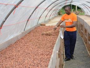le-cameroun-inaugure-deux-nouveaux-centres-d-excellence-de-traitement-post-recolte-du-cacao