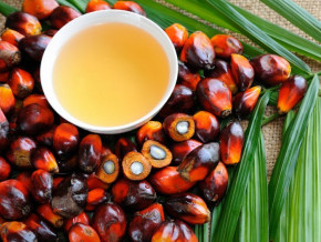 chute-vertigineuse-de-la-production-d-huile-de-palme-de-l-agro-industriel-camerounais-cdc-au-premier-semestre-2019