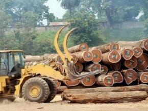 l-exploitation-forestiere-et-l-agriculture-vivriere-ont-ralenti-la-croissance-du-secteur-primaire-au-cameroun-en-2019