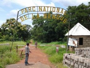 chasse-aux-orpailleurs-dans-le-parc-de-la-benoue-dans-la-region-du-nord-du-cameroun