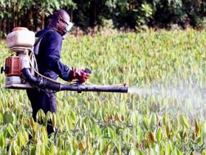 depuis-1996-le-cameroun-a-homologue-1153-produits-phytosanitaires