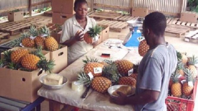 apres-un-1er-decaissement-de-30-milliards-fcfa-l-etat-camerounais-debloque-de-nouveau-10-milliards-fcfa-pour-payer-sa-dette-envers-les-pme