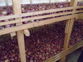 le-prix-du-sac-d-oignons-s-envole-dans-la-capitale-camerounaise-atteignant-150-000-fcfa-contre-25-000-fcfa-il-y-a-quelques-mois