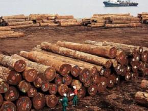 le-cameroun-domine-le-top-10-des-fournisseurs-des-bois-en-grume-a-la-republique-du-vietnam-en-2018