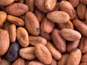 en-depit-de-la-saison-des-pluies-le-prix-moyen-bord-champ-du-kilogramme-de-cacao-atteint-1060-fcfa-au-cameroun