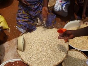 les-prix-des-cereales-en-hausse-de-38-dans-les-regions-septentrionales-du-cameroun-faisant-planer-une-menace-de-famine