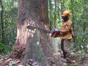 deforestation-selon-l-ue-le-cameroun-perd-chaque-annee-3-fois-la-surface-de-yaounde-en-foret