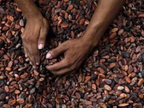 les-producteurs-camerounais-vendent-le-kg-de-cacao-a-950-fcfa-au-moins-grace-a-un-programme-d-assainissement-du-secteur
