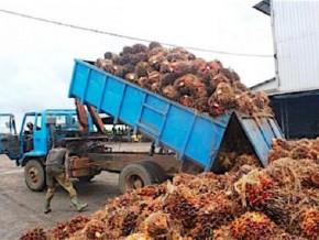 en-depit-du-covid-19-la-societe-camerounaise-de-palmeraies-affiche-un-benefice-net-de-11-5-milliards-de-fcfa-en-2020