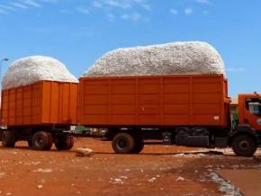a-la-sodecoton-plus-de-70-de-la-production-a-deja-ete-transportee-des-champs-vers-les-usines-pour-eviter-la-mouille