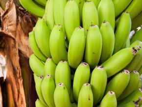 au-cameroun-la-crise-anglophone-fait-chuter-les-exportations-de-bananes-de-13-394-tonnes-en-septembre-et-octobre-2018