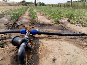 un-financement-de-110-milliards-de-fcfa-pour-ameliorer-la-production-agricole-dans-le-nord-du-cameroun