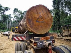 les-expeditions-camerounaises-de-sapelli-vers-le-canada-ont-chute-au-premier-trimestre-2018