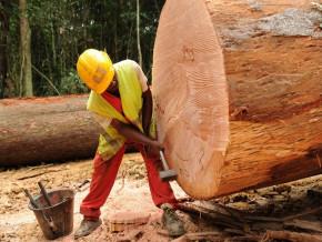 aux-pays-bas-le-cameroun-et-le-gabon-jouent-un-role-particulierement-important-dans-la-fourniture-du-bois-dans-le-genie-civil
