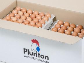 le-cameroun-interdit-l-importation-des-oeufs-a-couver-et-des-poussins-d-un-jour-pour-se-premunir-contre-la-grippe-aviaire
