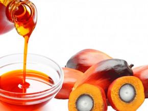 cameroun-l-acceleration-des-investissements-par-les-raffineurs-fait-exploser-la-demande-d-huile-de-palme-a-plus-d-un-million-de-tonnes