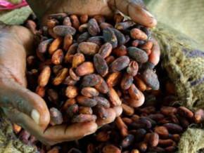 atlantic-cocoa-ne-se-reconnait-pas-dans-l-analyse-du-gicam-relative-aux-pertes-financieres-dans-la-filiere-cacao-au-cameroun