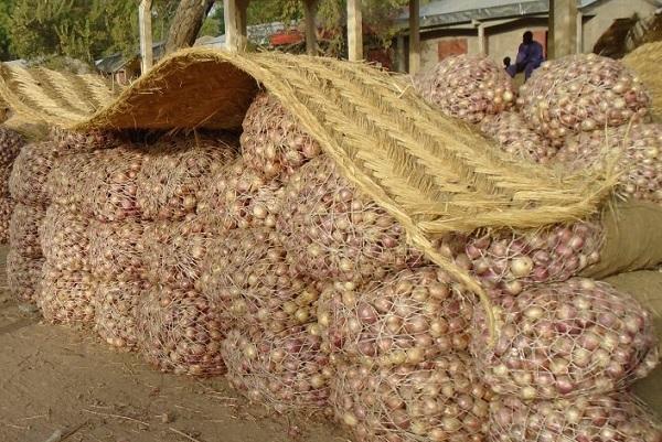 le-sac-d-oignons-atteint-le-prix-record-de-120-000-fcfa-a-yaounde-soit-6-fois-plus-que-d-habitude