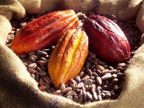 cameroun-a-2-mois-de-la-fin-de-la-campagne-cacaoyere-2017-2018-les-achats-des-exportateurs-culminent-a-environ-220-000-tonnes