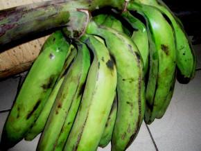 une-unite-de-transformation-de-la-banane-plantain-annoncee-dans-la-localite-de-pouma-dans-la-region-du-centre-du-cameroun