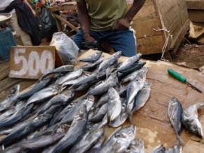 le-gouvernement-camerounais-rassure-sur-la-disponibilite-du-riz-et-du-poisson-dans-les-marches