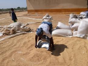 un-projet-pour-augmenter-de-80-000-tonnes-la-production-annuelle-de-riz-blanchi-du-cameroun-des-2023