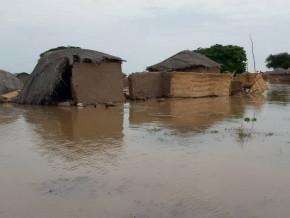 inondations-et-elephants-detruisent-plus-de-11-000-tonnes-de-cereales-dans-le-mayo-danay-a-l-extreme-nord-du-cameroun