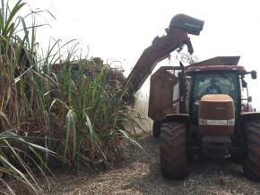 sosucam-filiale-de-somdiaa-atteint-la-production-record-de-124-tonnes-de-sucre-au-cours-de-la-campagne-2018-2019