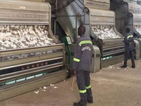 sur-une-production-de-coton-de-320-000-tonnes-le-cameroun-pourrait-ne-pas-transformer-40-000-tonnes-faute-de-capacite