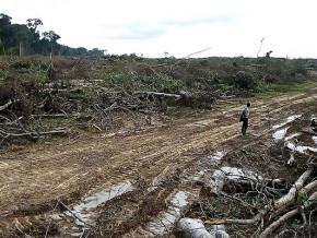 cameroun-vert-sa-societe-du-milliardaire-aboubakar-al-fatih-epinglee-par-green-peace