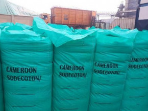 coton-les-exportations-du-cameroun-progressent-de-pres-de-62-au-premier-semestre-2021