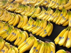 malgre-l-arret-de-la-cdc-les-exportations-de-bananes-du-cameroun-ont-ete-plus-dynamiques-en-2019-qu-en-2018