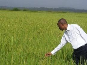 le-ministere-de-l-agriculture-annonce-l-acquisition-d-une-unite-de-decorticage-de-riz-pour-les-producteurs-du-nord-ouest