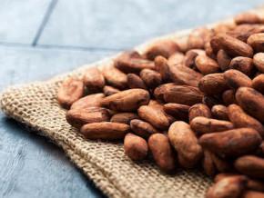 le-prix-du-cacao-camerounais-monte-a-1080-fcfa-le-kilogramme-en-depit-de-la-saison-des-pluies