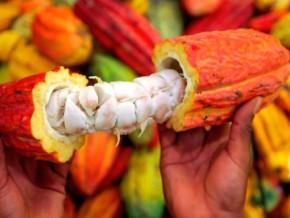 le-cameroun-lance-la-selection-des-producteurs-de-cacao-devant-beneficier-de-la-prime-a-la-qualite-d-un-montant-global-d-un-milliard-fcfa