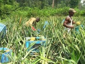 secteur-agro-pastoral-le-cameroun-et-le-bit-initient-un-plan-de-reformes-de-5-ans-pour-doper-les-investissements
