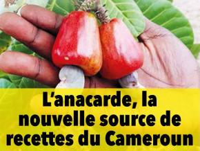 le-magazine-investir-au-cameroun-explore-les-opportunites-qu-offre-la-culture-de-l-anacarde-au-cameroun
