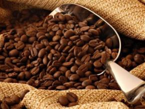 cafe-a-un-minimum-de-525-fcfa-le-kg-le-robusta-camerounais-atteint-son-prix-le-plus-eleve-depuis-un-an