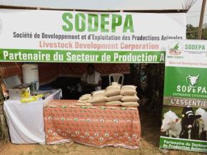 au-cameroun-la-sodepa-s-associe-a-un-centre-de-formation-pour-vulgariser-l-elevage-bovin-en-zone-forestiere