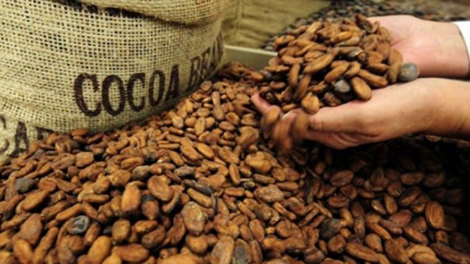 au-cameroun-la-filiere-cacao-cafe-a-ete-le-principal-catalyseur-de-la-baisse-des-recettes-d-exportation-au-premier-semestre-2018