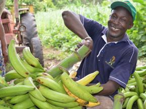 vers-la-mise-de-clusters-filiere-banane-plantain-et-piscicole-autour-de-la-ville-industrialo-portuaire-de-kribi
