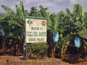 deux-entreprises-canadienne-et-francaise-au-chevet-de-l-agro-industriel-camerounais-cdc