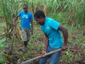 les-pays-de-l-afrique-centrale-recensent-les-mesures-pour-l-essor-de-l-emploi-decent-des-jeunes-dans-l-agriculture