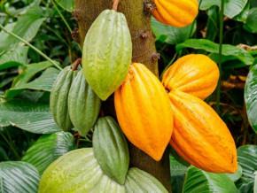 agro-industrie-l-iut-de-douala-developpe-de-mini-plantations-pour-former-ses-etudiants-a-transformer-des-produits-locaux