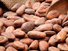 au-cameroun-le-prix-des-feves-de-cacao-atteint-de-nouveau-la-barre-de-1-000-fcfa-le-kilogramme
