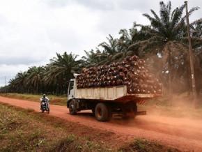 huile-de-palme-la-production-camerounaise-annoncee-a-la-baisse-au-4e-trimestre-2021