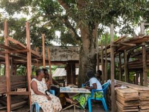 avec-3-4-de-bois-illegal-sur-son-marche-le-cameroun-prepare-une-plateforme-pour-les-transactions-de-bois-legal