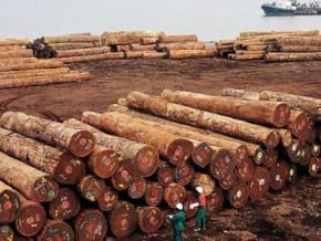 cameroun-le-port-de-kribi-ravit-a-celui-de-douala-les-exportations-de-bois-scies-et-en-grumes-de-la-republique-centrafricaine